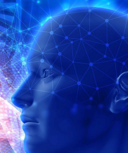 Cartilha de estímulo cognitivo Volume 1