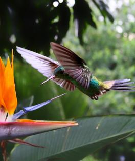 sustentabilidade news pássaros