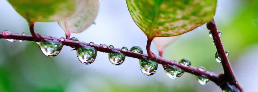 sustentabilidade news ciclo da água